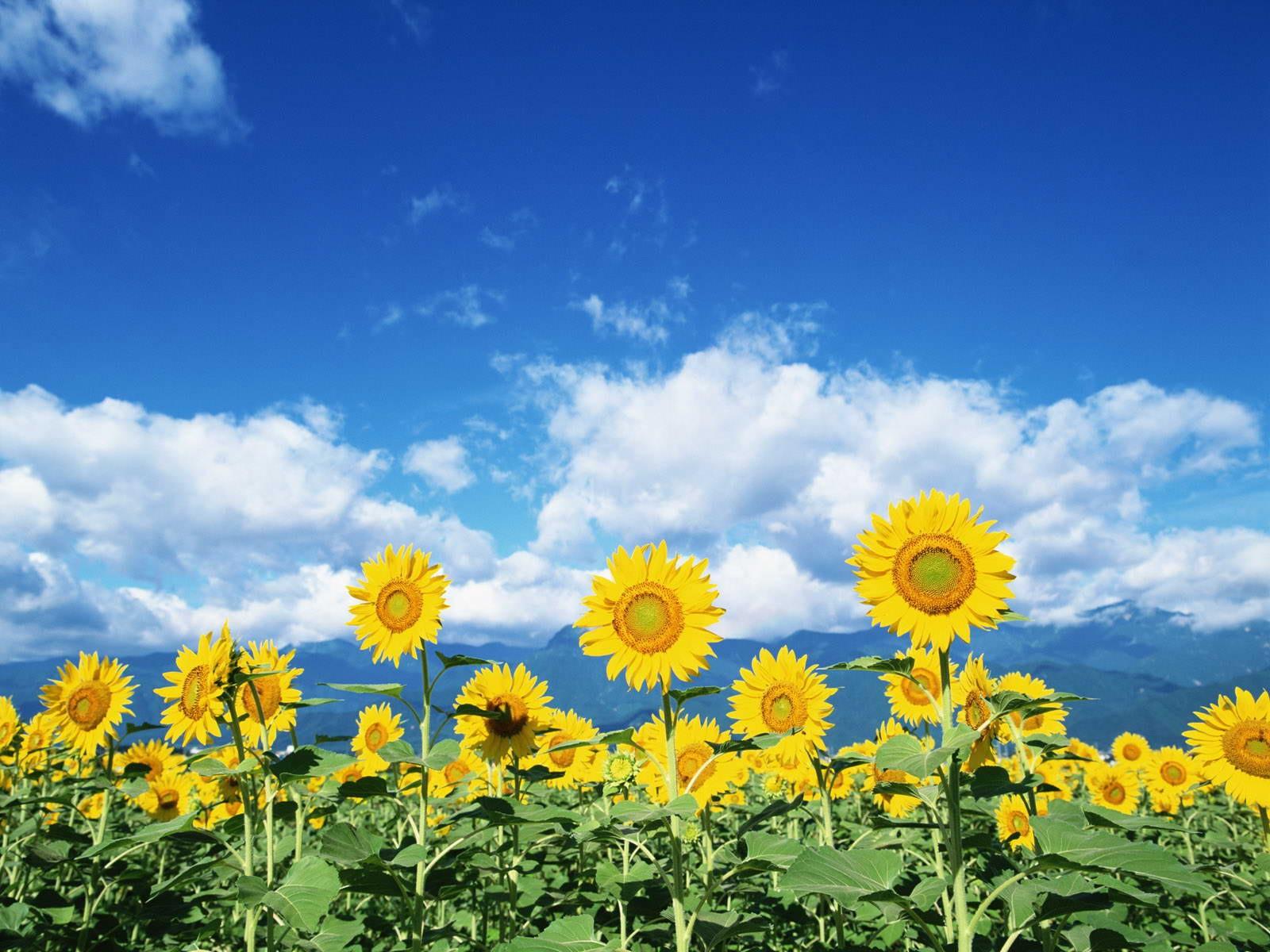 Небо прекрасная погода картинки