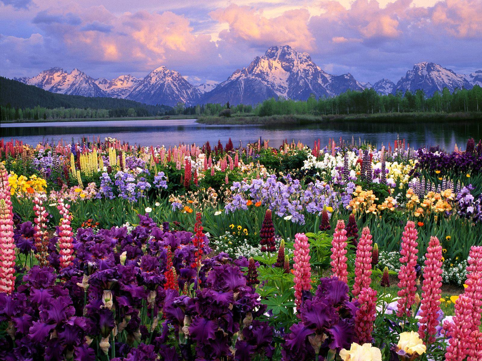 Стол цветочный сад фото бесплатно