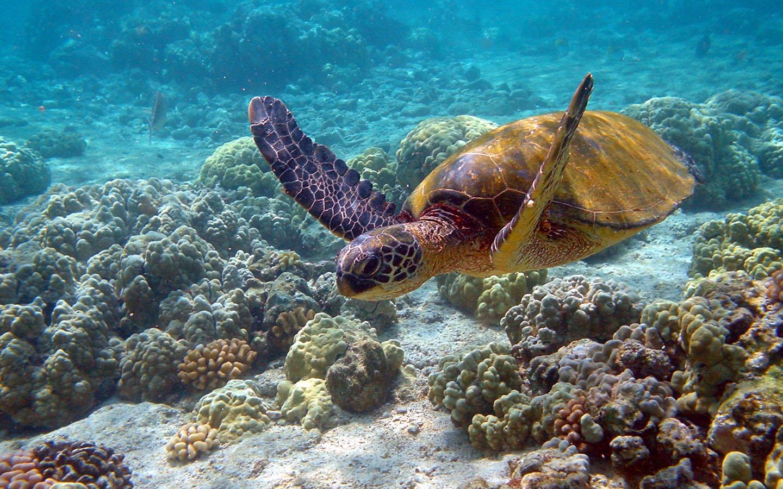 Большой барьерный риф обои фото