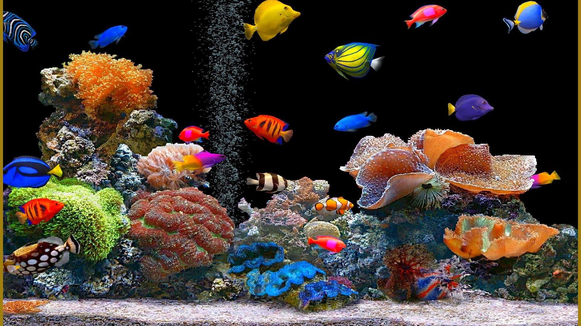 Аквариум обои фото морские обитатели