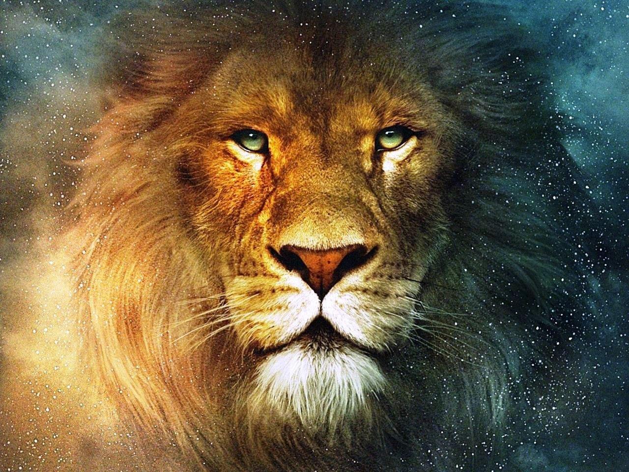 Гордый лев обои скачать картинки на