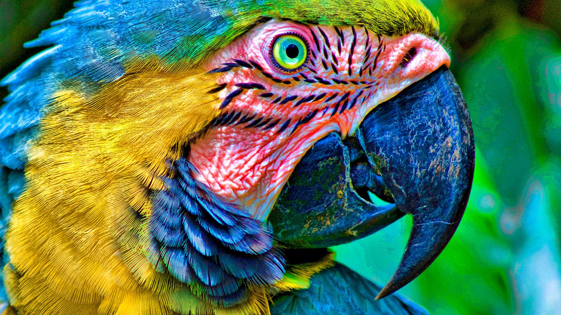 Попугай ара птица обои скачать