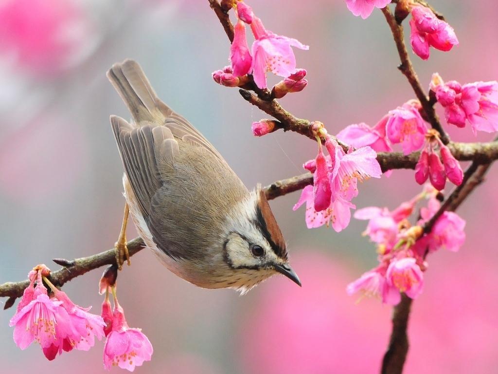 Радость весны обои фото дерево цветет
