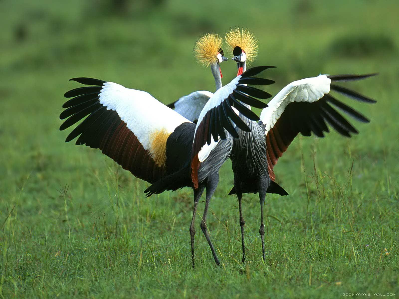Красивые птицы обои фото птицы с