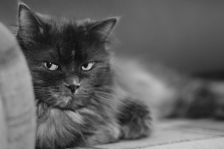 Сытый кот обои фото кот на отдыхе