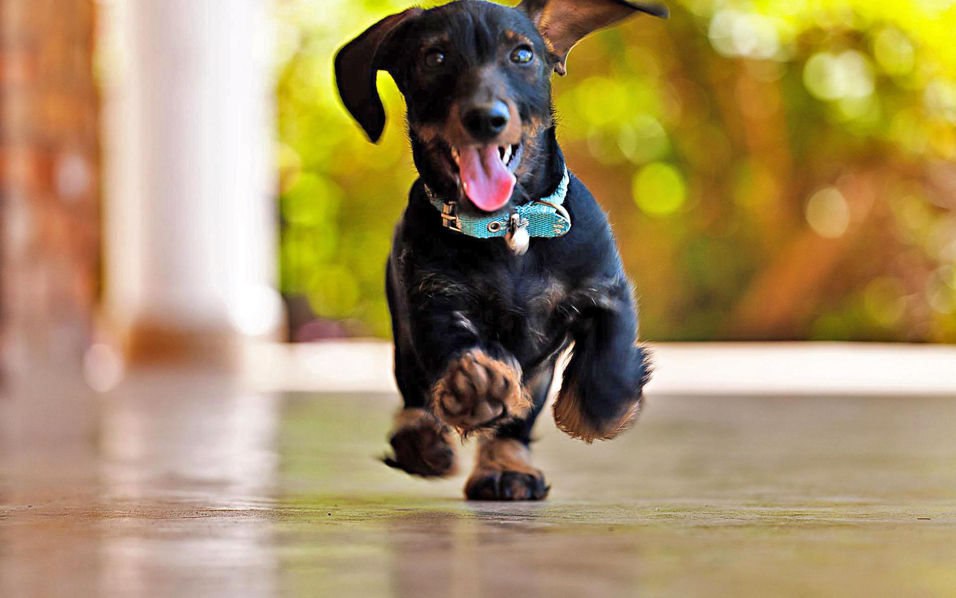 Радостная собака обои фото язык