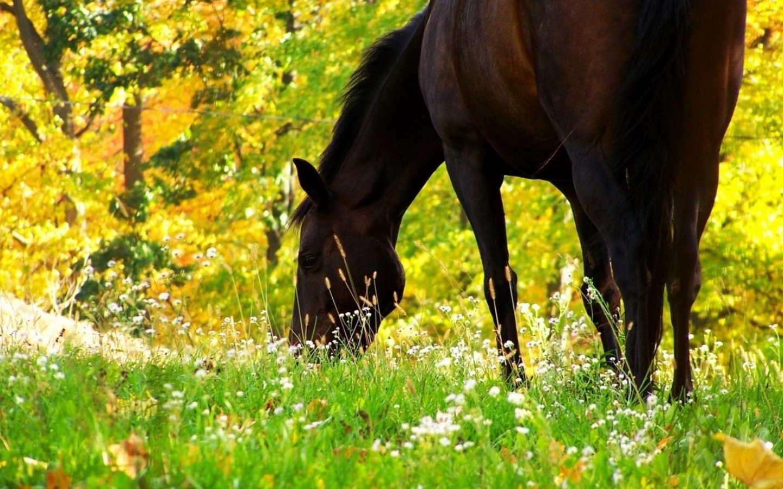 лошадь ест фото
